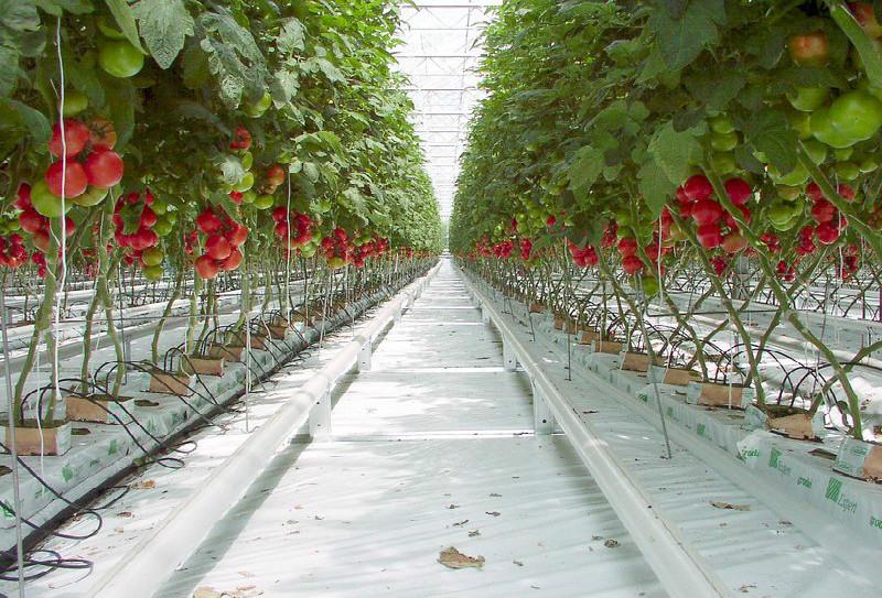 L'Agropôle Souss Massa: MEDZ lance la commercialisation