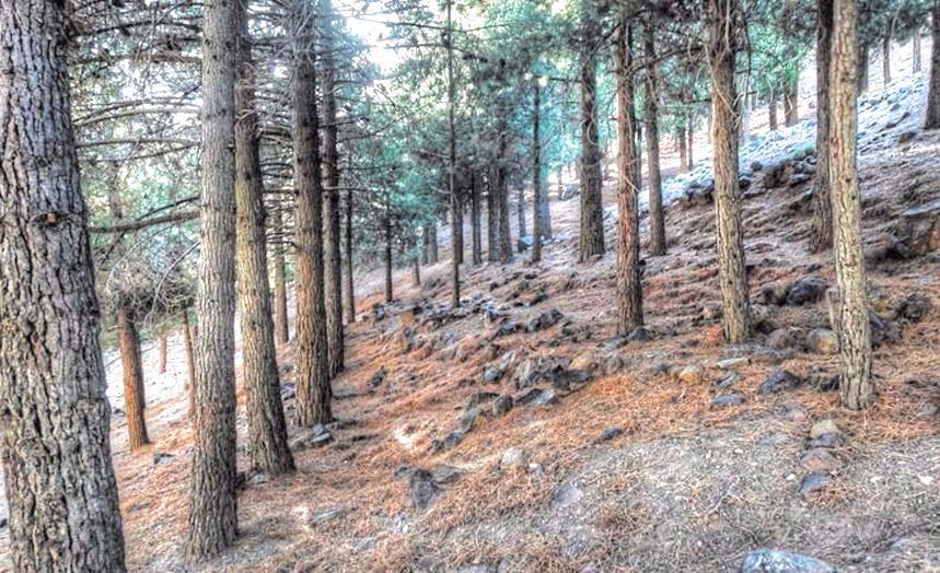 Plusieurs pays en conclave à Agadir pour la protection des forêts