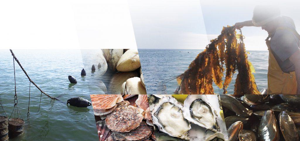 L'ANDA lance deux Appels à Manifestation d'Intérêt (AMI) pour le développement de projets d'aquaculture dans la Région de Souss Massa